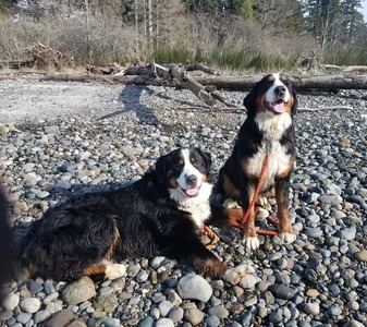 Grut & Hazel at the Beach -- March 2019